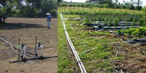 irrigationWeb