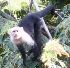 monkeyWeb