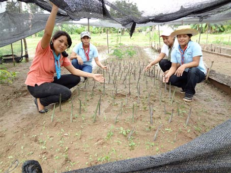 planting-mangrove-seedlin
