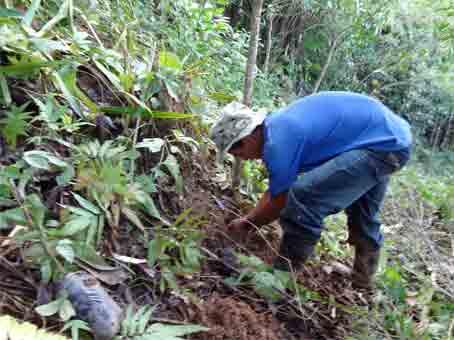 planting_mountainWeb