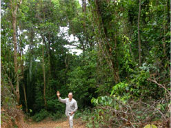 FunaVid forest