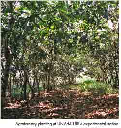 8 agroforestry