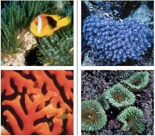 17 coral reef