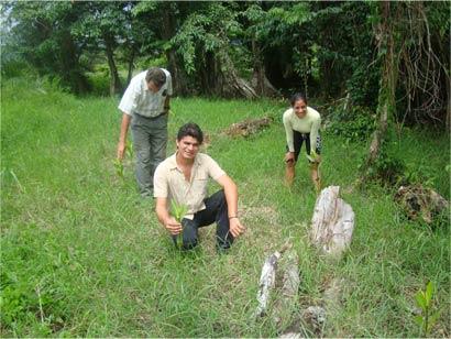 Mangrove seedlings planted