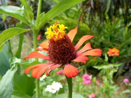 Honduran flower